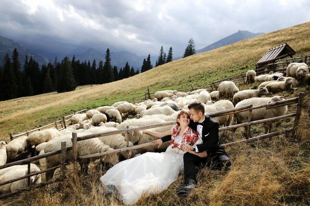 Owce i my.